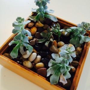 Square Bamboo Mini-Planter 6x6